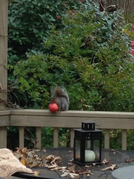 we are glad at someone is enjoying the apples.